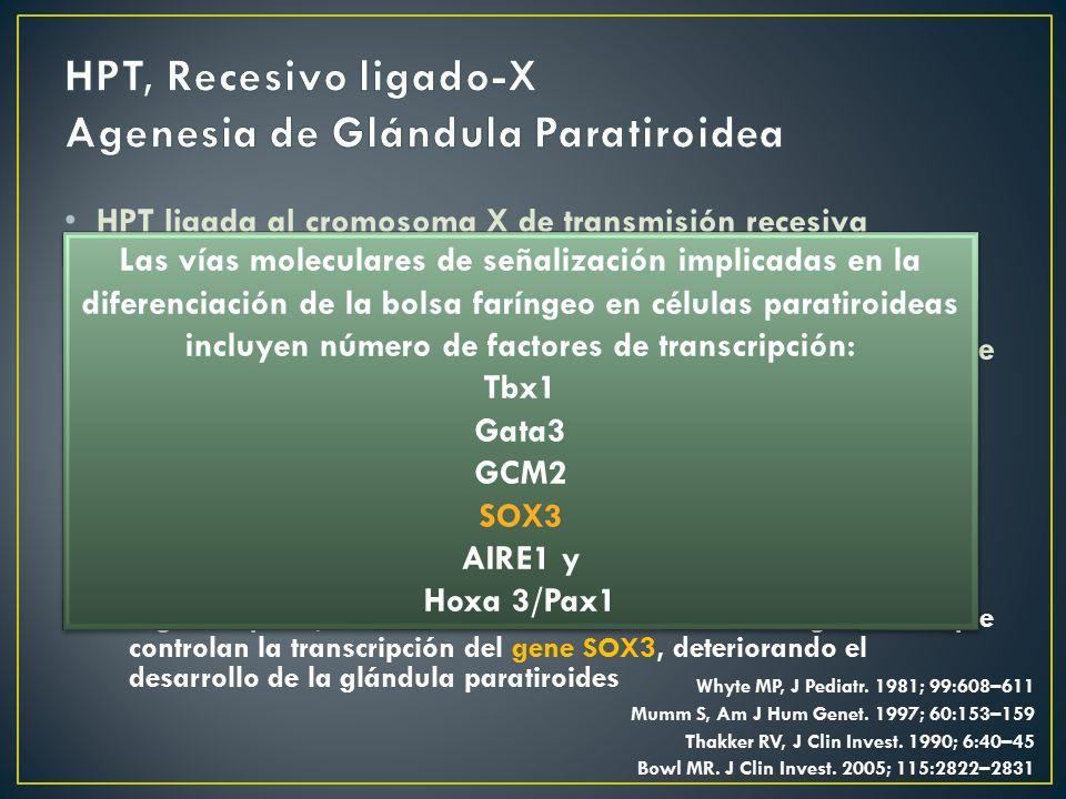 HPT, Recesivo ligado-X Agenesia de Glándula Paratiroidea