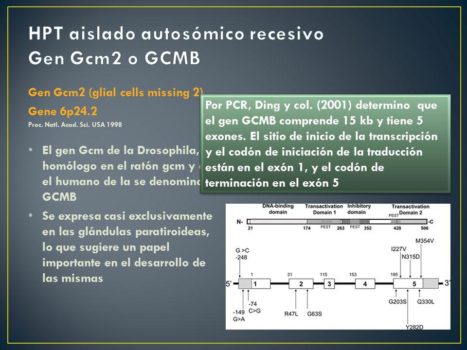 HPT aislado autosómico recesivo Gen Gcm2 o GCMB