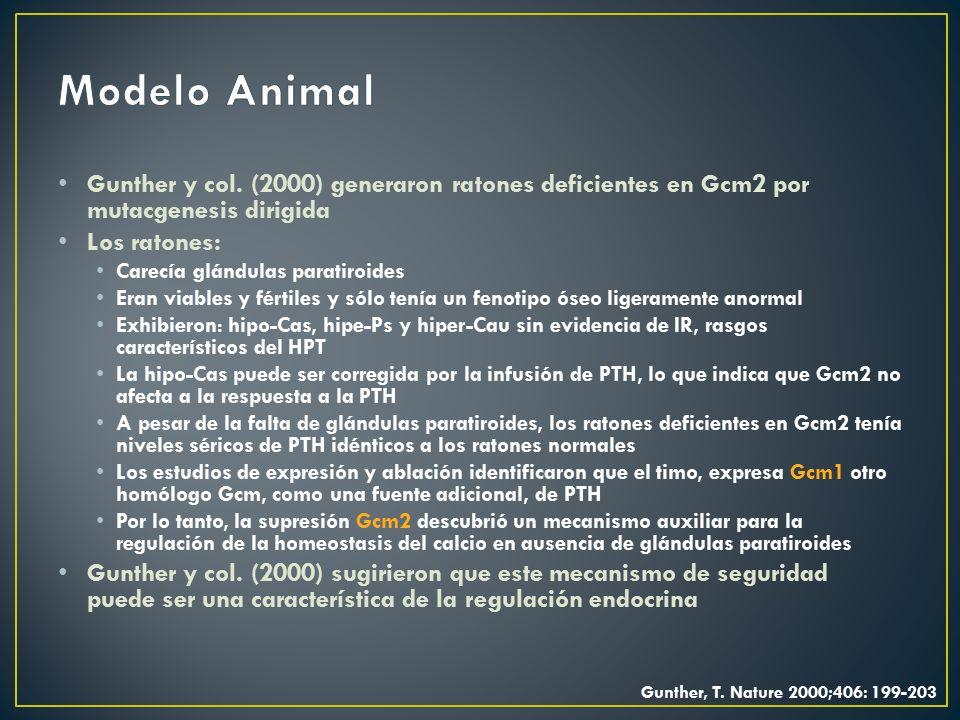 Modelo Animal Gunther y col. (2000) generaron ratones deficientes en Gcm2 por mutacgenesis dirigida.