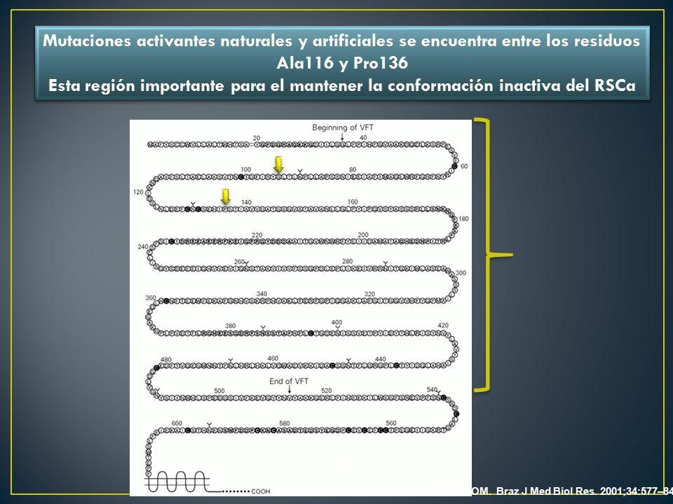 Mutaciones activantes naturales y artificiales se encuentra entre los residuos Ala116 y Pro136