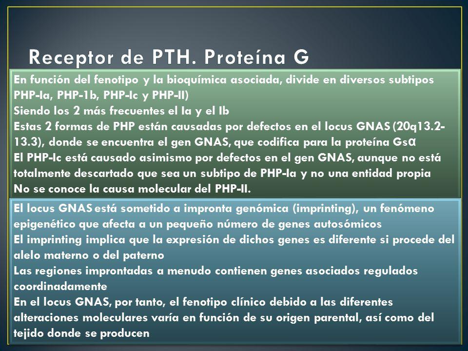 Receptor de PTH. Proteína G