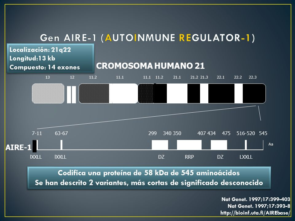 Gen AIRE-1 (AUTOINMUNE REGULATOR-1)