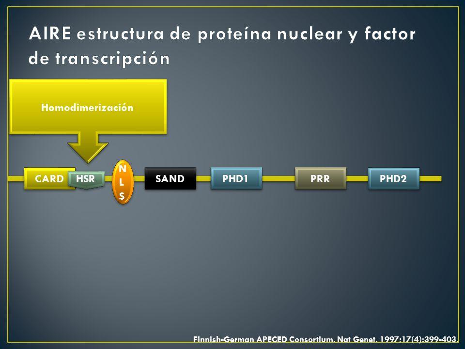 AIRE estructura de proteína nuclear y factor de transcripción
