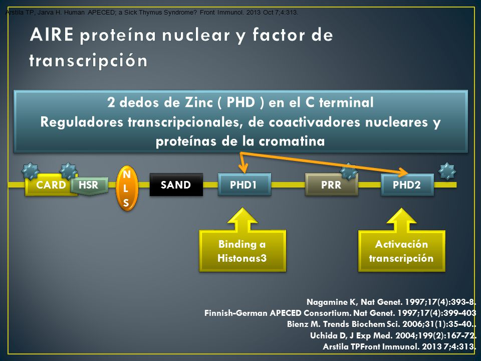 AIRE proteína nuclear y factor de transcripción
