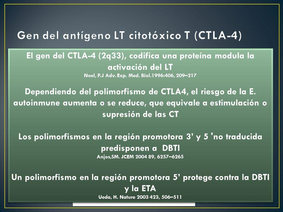 Gen del antígeno LT citotóxico T (CTLA-4)