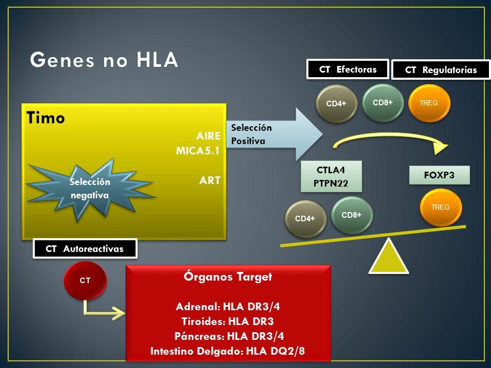 Intestino Delgado: HLA DQ2/8
