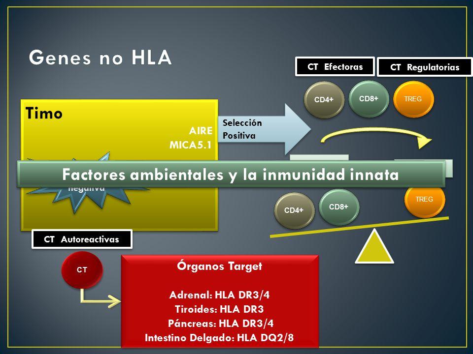 Genes no HLA Timo Factores ambientales y la inmunidad innata