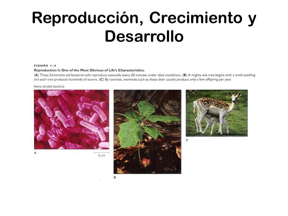 Reproducción, Crecimiento y Desarrollo