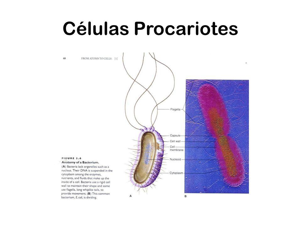 Células Procariotes