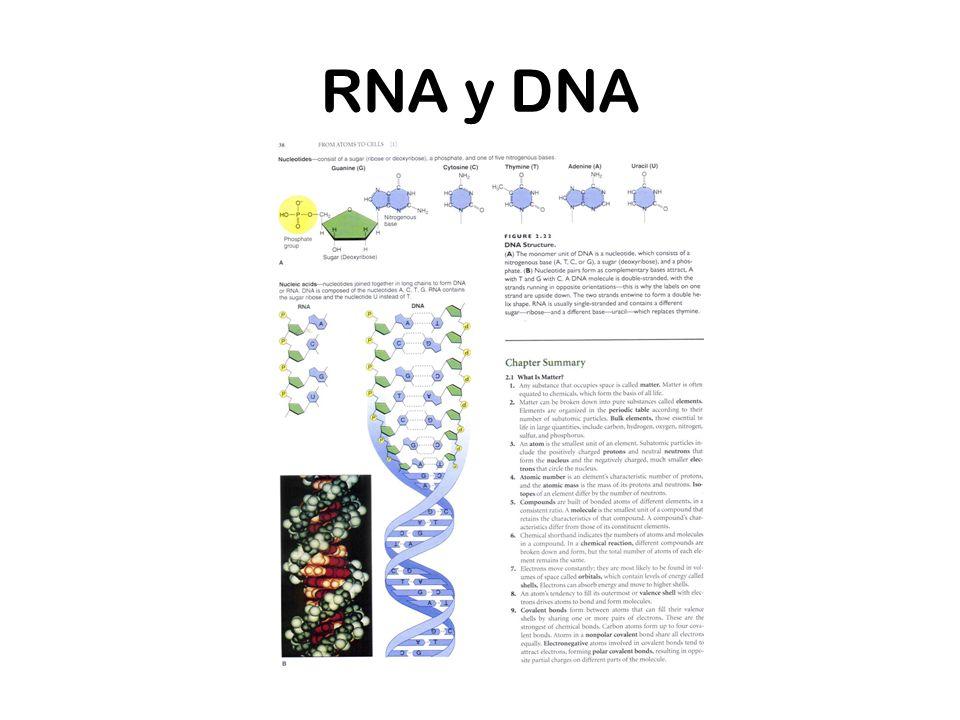 RNA y DNA