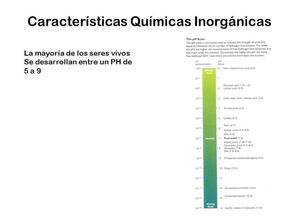 Características Químicas Inorgánicas