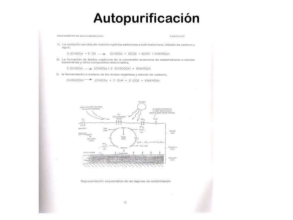 Autopurificación