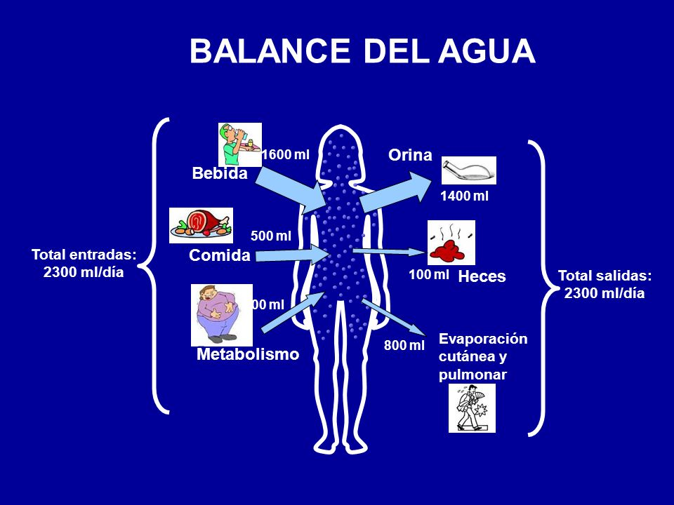 BALANCE DEL AGUA Orina Bebida Comida Heces Metabolismo Total entradas: