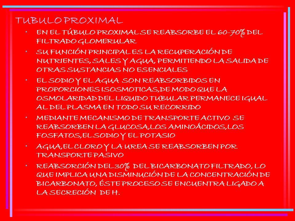 TUBULO PROXIMAL EN EL TÚBULO PROXIMAL SE REABSORBE EL 60-70% DEL FILTRADO GLOMERULAR.