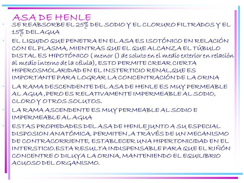 ASA DE HENLE SE REABSORBE EL 25% DEL SODIO Y EL CLORURO FILTRADOS Y EL 15% DEL AGUA.