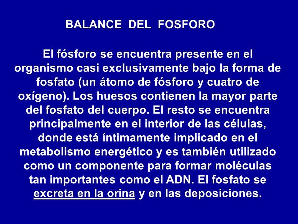 BALANCE DEL FOSFORO