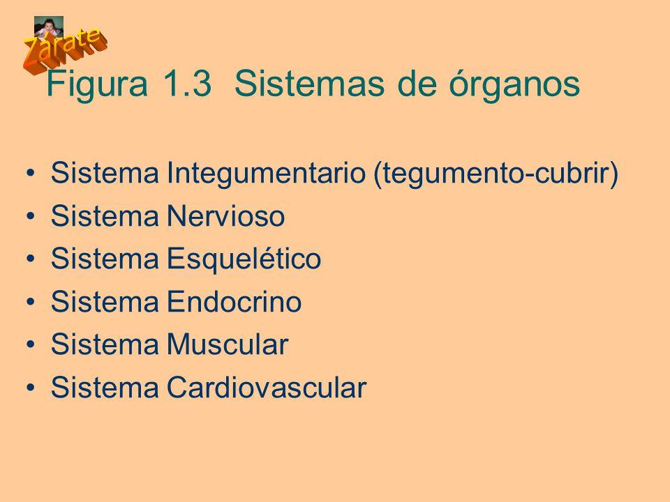 Figura 1.3 Sistemas de órganos