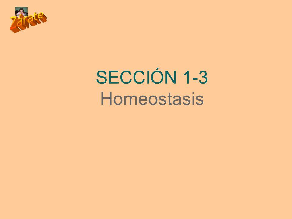SECCIÓN 1-3 Homeostasis