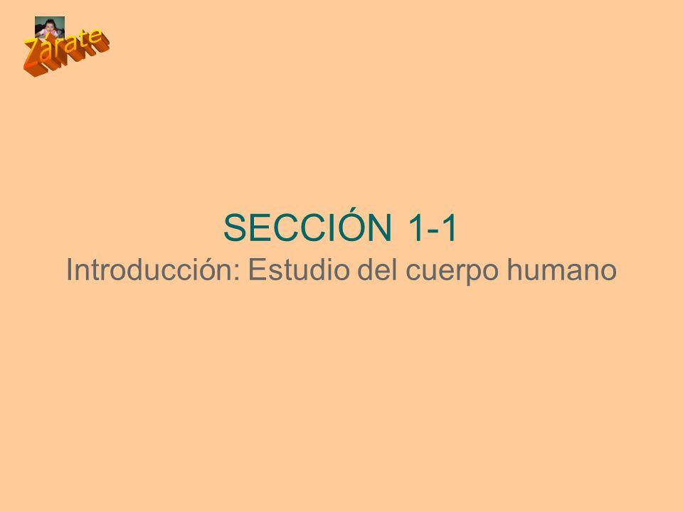 SECCIÓN 1-1 Introducción: Estudio del cuerpo humano