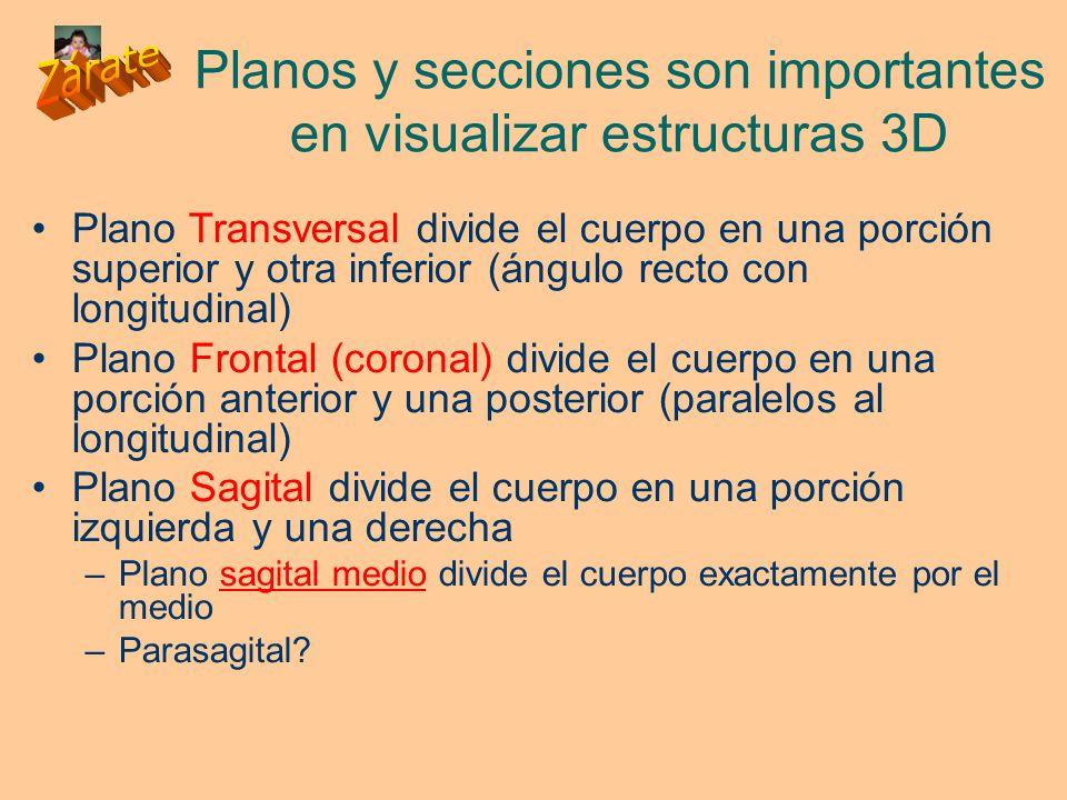Planos y secciones son importantes en visualizar estructuras 3D