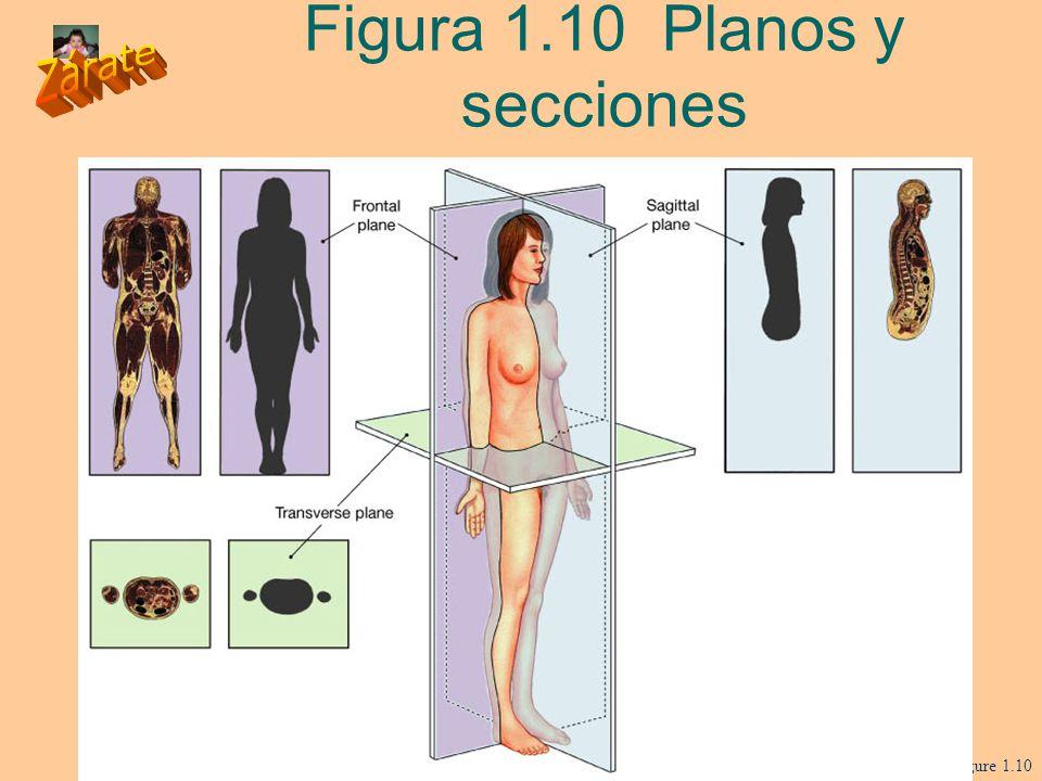 Figura 1.10 Planos y secciones