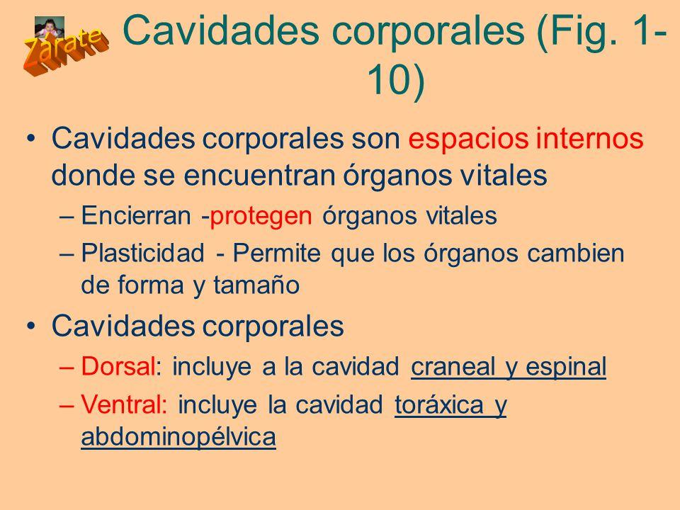 Cavidades corporales (Fig. 1-10)