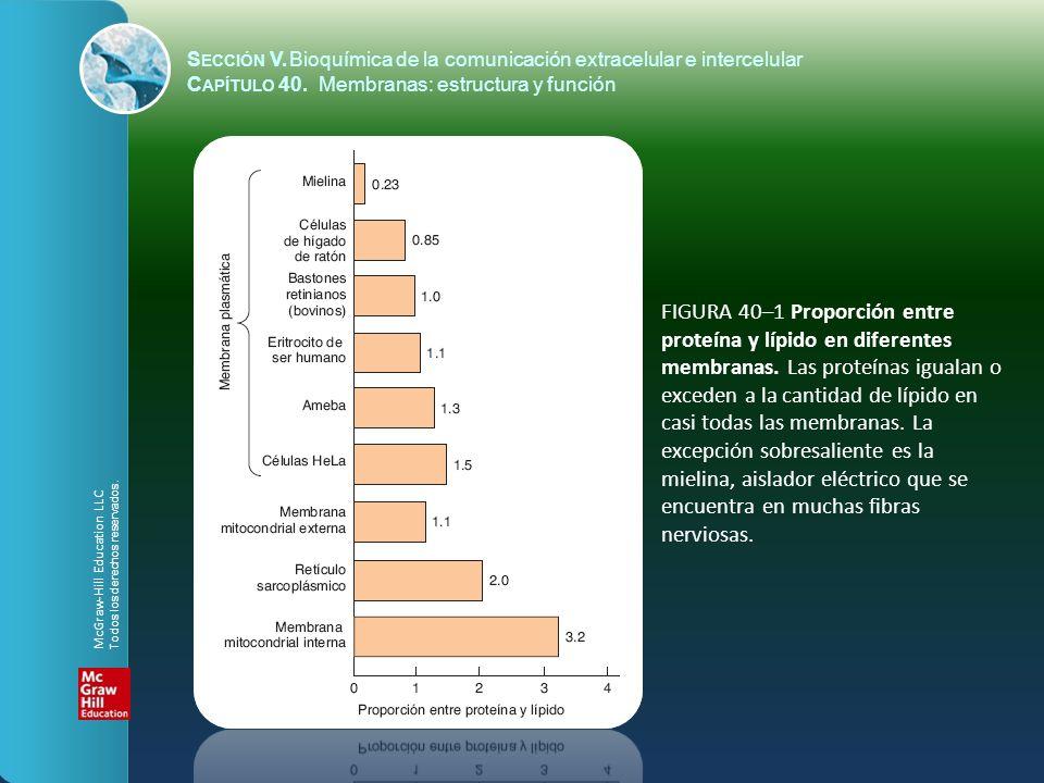 FIGURA 40–1 Proporción entre proteína y lípido en diferentes