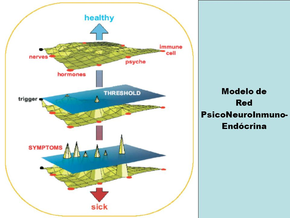 Modelo de Red PsicoNeuroInmuno- Endócrina