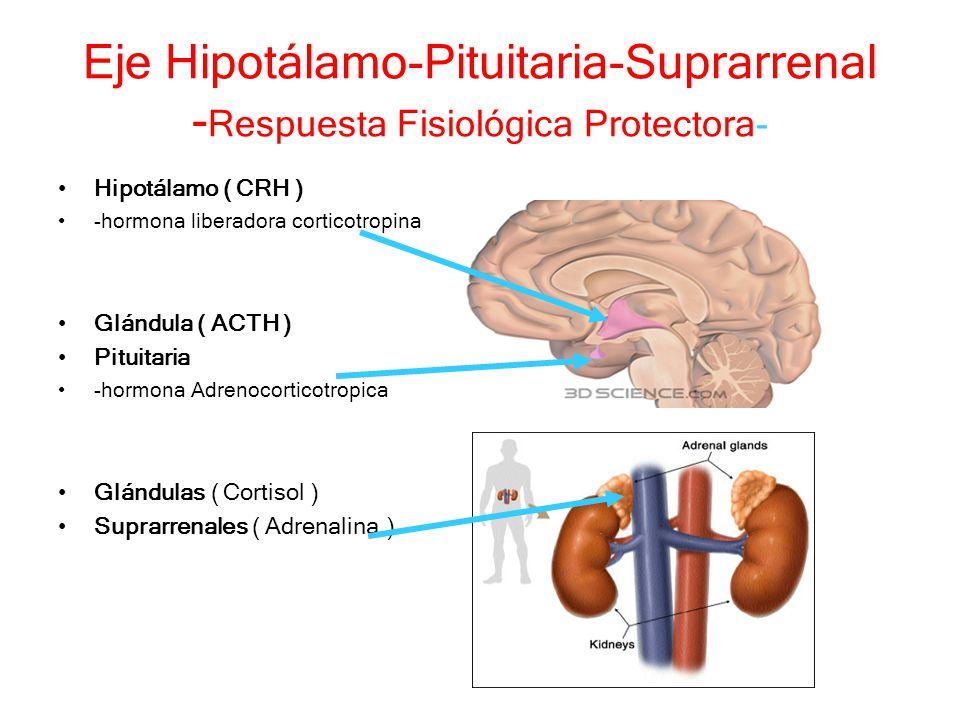 Eje Hipotálamo-Pituitaria-Suprarrenal -Respuesta Fisiológica Protectora-