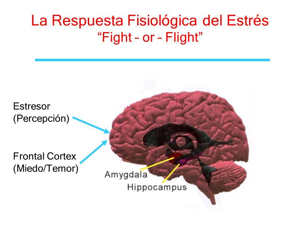 La Respuesta Fisiológica del Estrés Fight – or – Flight