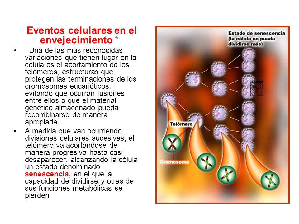 Eventos celulares en el envejecimiento *