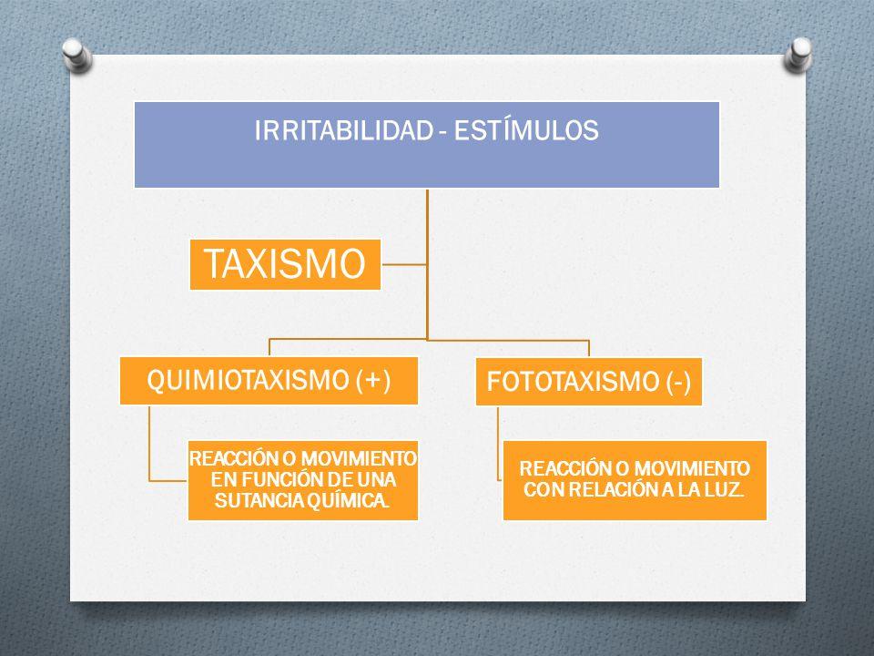 TAXISMO IRRITABILIDAD - ESTÍMULOS QUIMIOTAXISMO (+) FOTOTAXISMO (-)