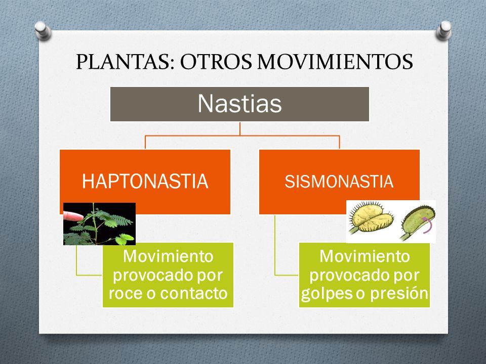 PLANTAS: OTROS MOVIMIENTOS
