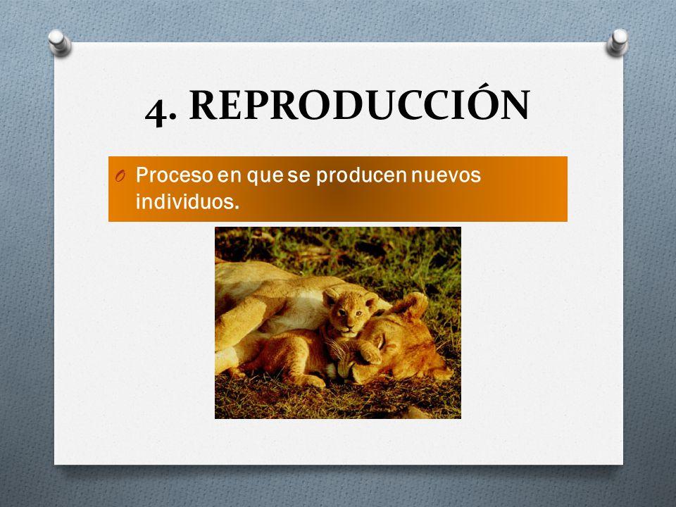 4. REPRODUCCIÓN Proceso en que se producen nuevos individuos.