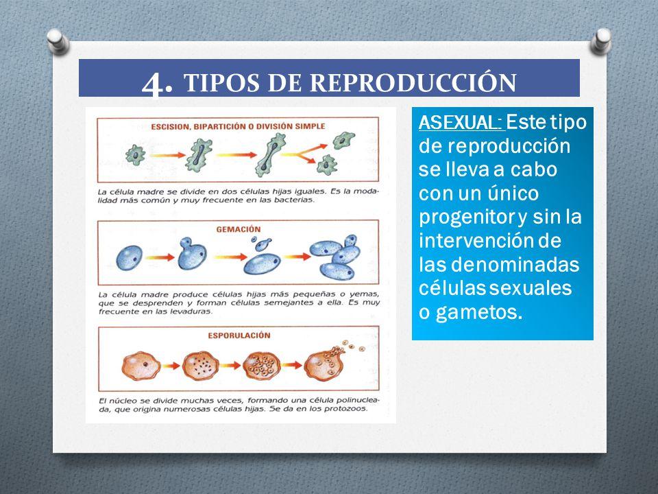 4. TIPOS DE REPRODUCCIÓN