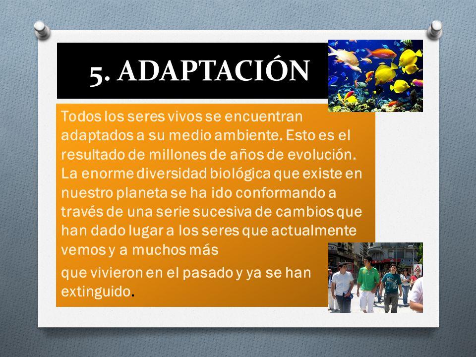 5. ADAPTACIÓN