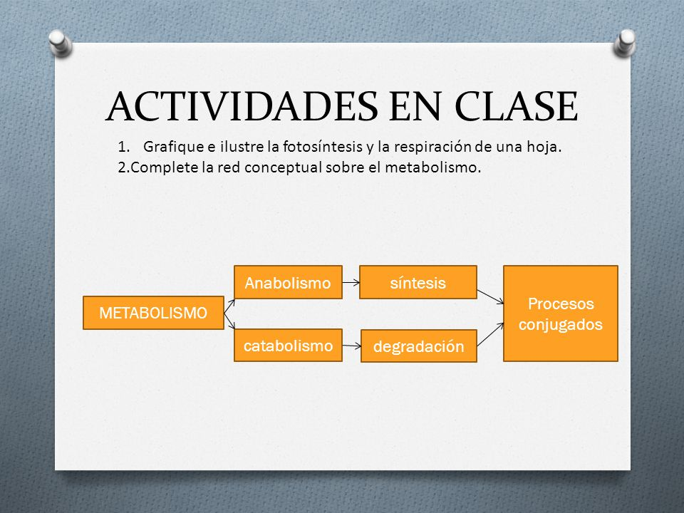 ACTIVIDADES EN CLASE Grafique e ilustre la fotosíntesis y la respiración de una hoja. 2.Complete la red conceptual sobre el metabolismo.