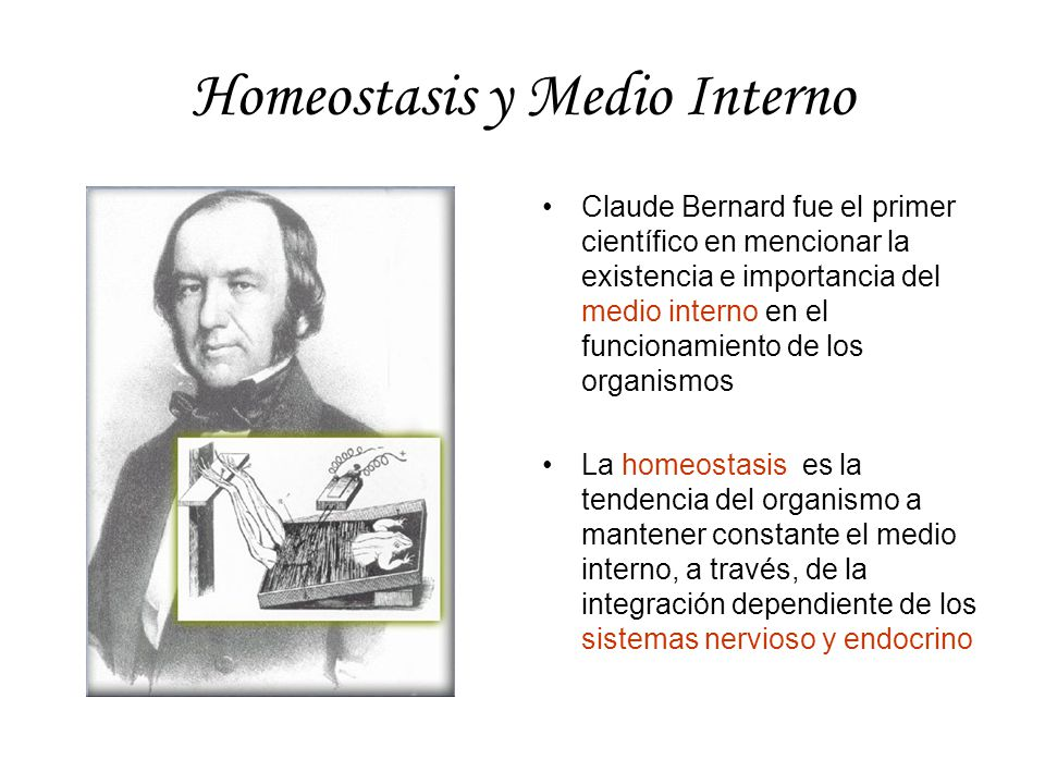 Homeostasis y Medio Interno