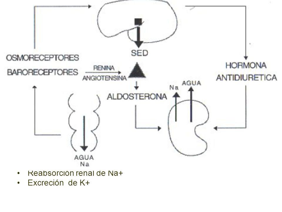Reabsorción renal de Na+