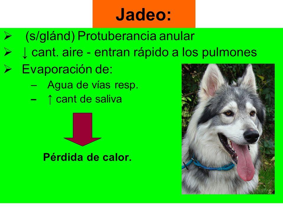 Jadeo: (s/glánd) Protuberancia anular