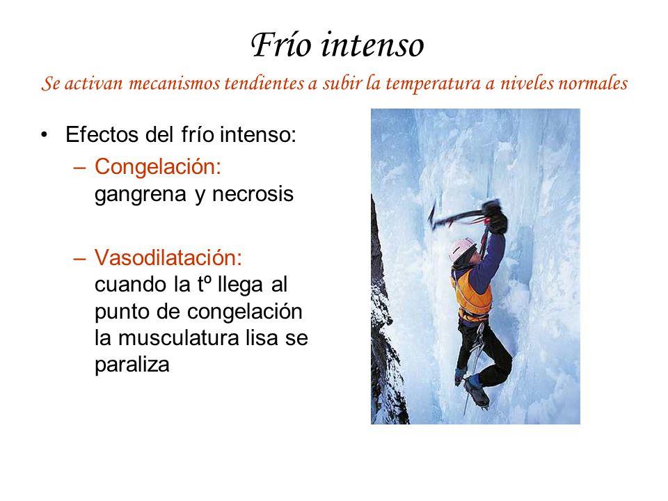 Frío intenso Se activan mecanismos tendientes a subir la temperatura a niveles normales. Efectos del frío intenso: