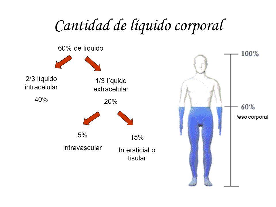Cantidad de líquido corporal