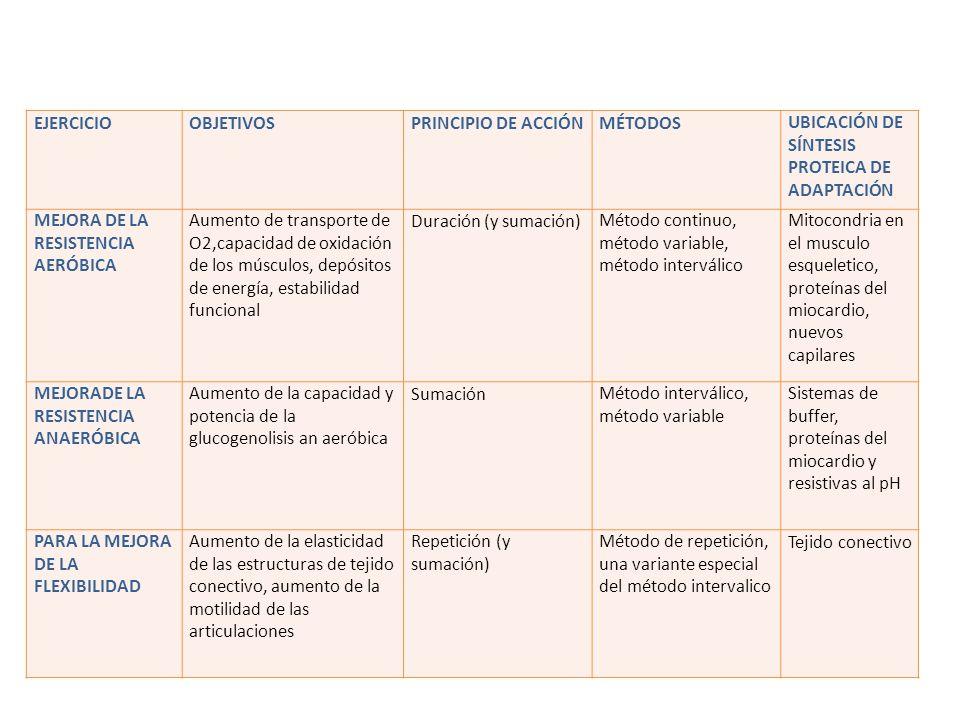 EJERCICIO OBJETIVOS. PRINCIPIO DE ACCIÓN. MÉTODOS. UBICACIÓN DE SÍNTESIS PROTEICA DE ADAPTACIÓN.