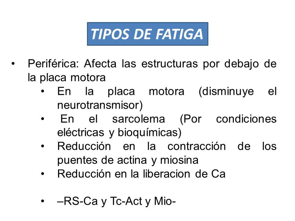 TIPOS DE FATIGA Periférica: Afecta las estructuras por debajo de la placa motora. En la placa motora (disminuye el neurotransmisor)