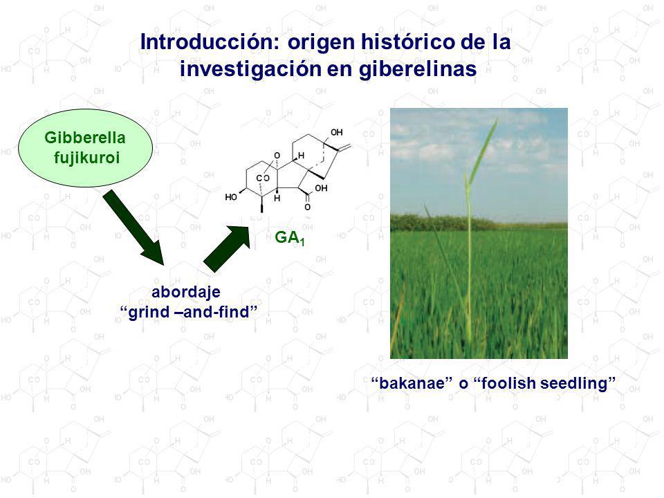 Introducción: origen histórico de la investigación en giberelinas