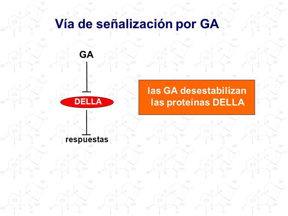 Vía de señalización por GA