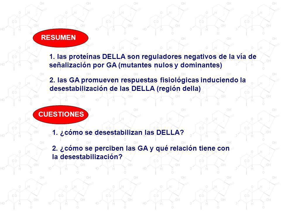 1. las proteínas DELLA son reguladores negativos de la vía de