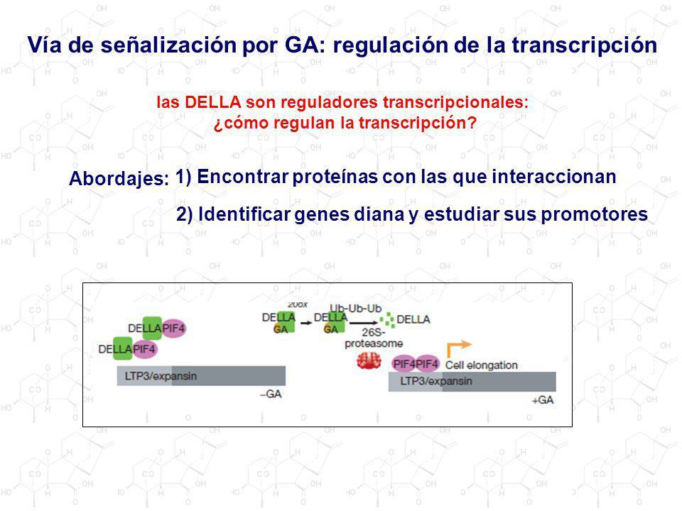 Vía de señalización por GA: regulación de la transcripción