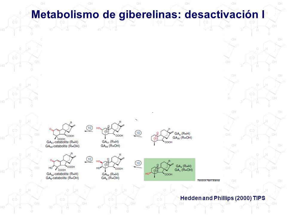 Metabolismo de giberelinas: desactivación I