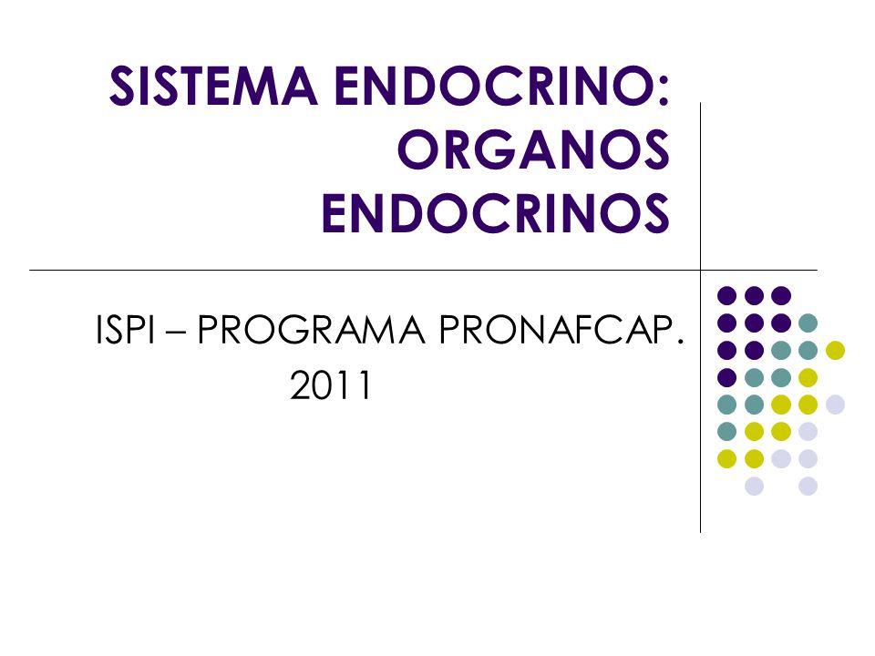SISTEMA ENDOCRINO: ORGANOS ENDOCRINOS